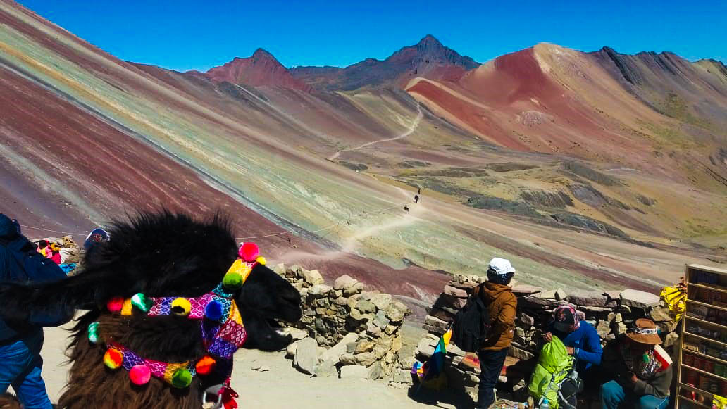 Llama View From Vinicunca